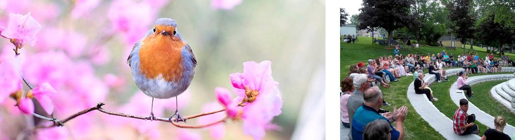 Spring Bird